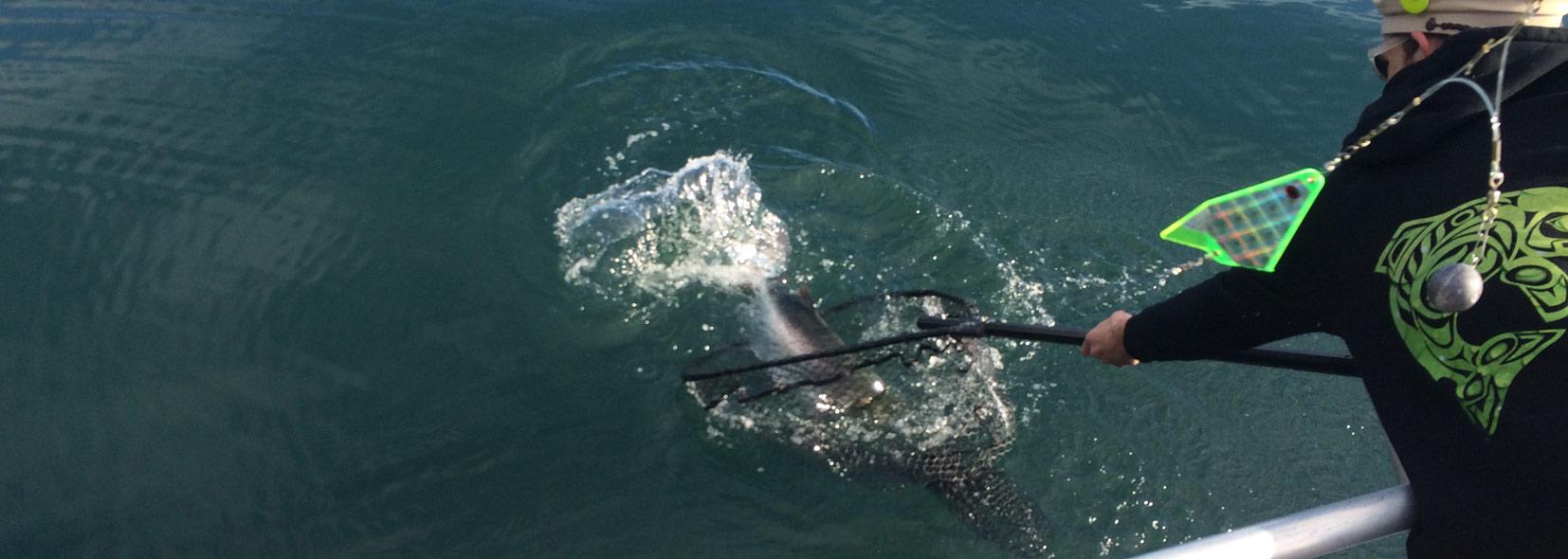 Halibut Lingcod Salmon Fishing In Seward And Kenai